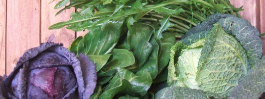 verdura di stagione biologica
