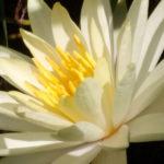 Fiore al Biolago di Sasso Pisano